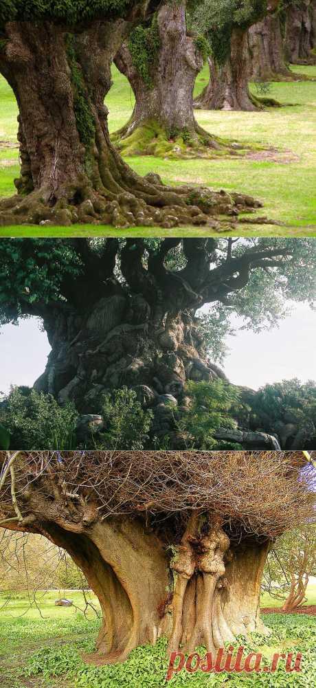 Самые необычные деревья в мире | Newpix.ru - позитивный интернет-журнал