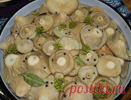Лучшие рецепты заготовок из грибов на зиму