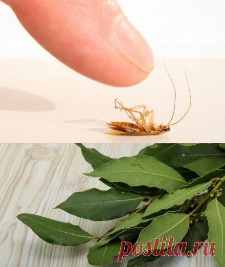 Как вывести тараканов раз и навсегда / Как сэкономить