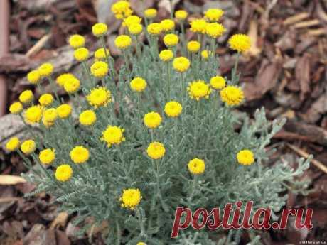 Солнцелюбивые цветники для начинающих — 6 соток