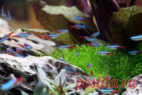 10 лучших аквариумных рыбок для начинающих