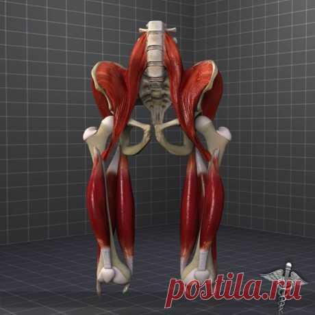 Упражнение для изменения положения таза Боль в области тазобедренного сустава может быть обусловлена многими причинами. Это упражнение поможет привести тазобедренный сустав в нормальное положение.