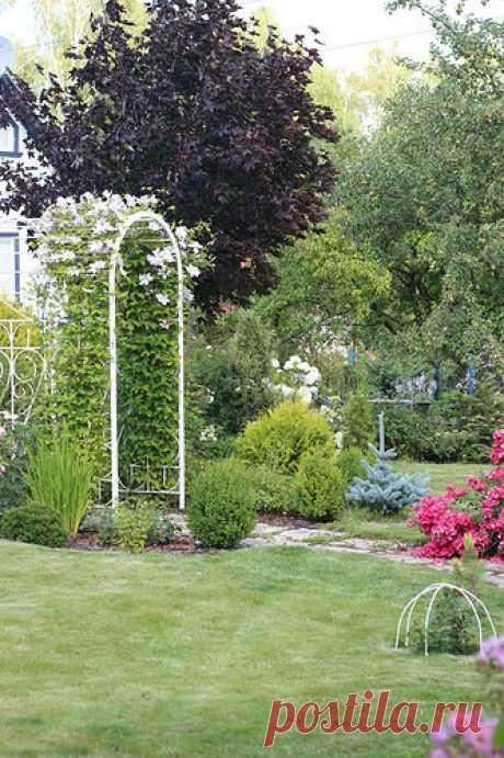 Проекты-онлайн • Просмотр темы - Сад роз Варвары (Barbara)