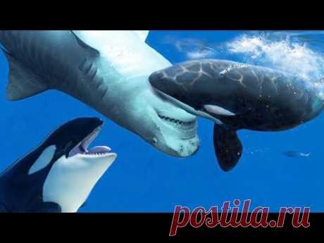 Косатка в деле. Как Косатки охотятся на Акул, огромных Китов, и Дельфинов !!!