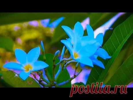 Moreza - Butterfly - YouTube