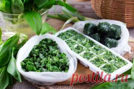 Как заморозить зелень: укроп, щавель, зеленый лук, шпинат, мяту, ревень...от menunedeli.ru