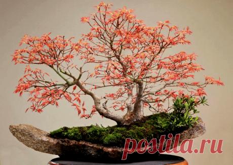 Бонсаи: оригинальные и гармоничные идеи ~ Planetalsad