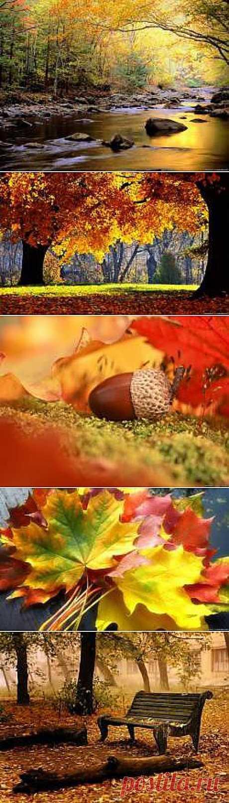Красивые Осень золотая картинки - 196 фото обои на рабочий стол галерея 1 - Фото мир природы