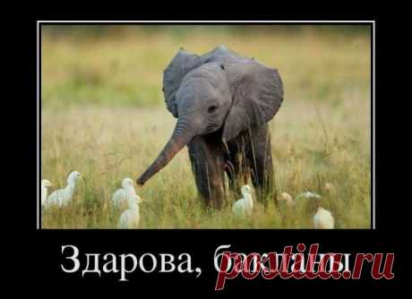 слонэ