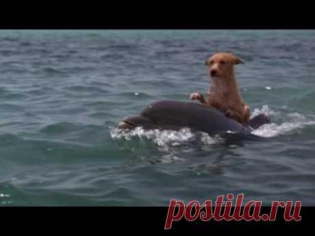Мир, дружба, любовь - Зевс и Роксана !!! Дельфин и собака