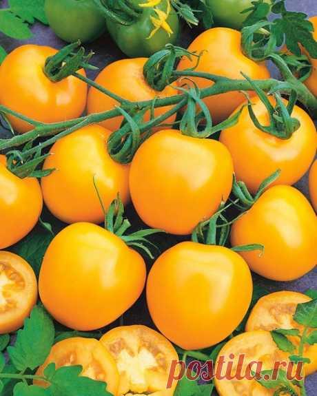 В ИЮЛЕ ДАЙТЕ ТОМАТАМ ЭТО, ЧТОБЫ УСИЛИТЬ ПЛОДОНОШЕНИЕ  Если вы хотите ускорить налив томатов, повысить их качество и общую урожайность, в середине июля еще раз подкормите растения. Тогда они будут плодоносить до холодов, и практически все завязи успеют вызреть.   Для этого разведите в 10 воды 1 ст. древесной золы, тщательно перемешайте, дайте постоять пару часов, чтобы питательные вещества перешли в раствор. Если золы нет, можно использовать на 10 л воды 1,5 ч. ложки сульфа...
