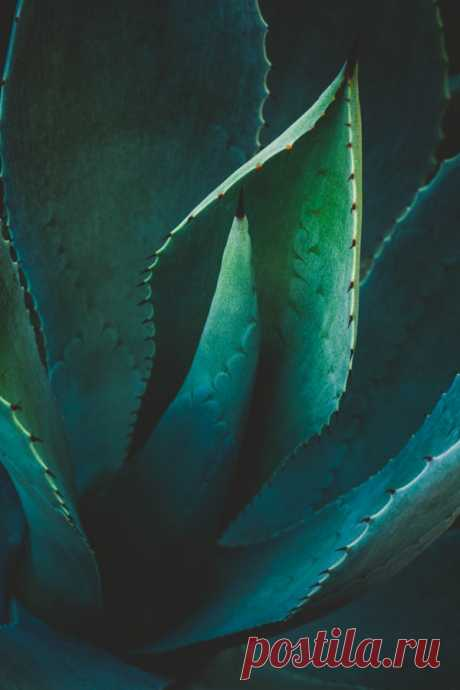 Agave by Alan Shapiro – Beautiful Pictures