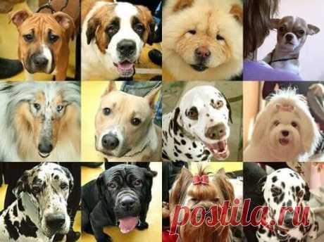 Хочу собаку: какую породу выбрать?