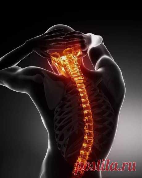 Main secret of a healthy backbone