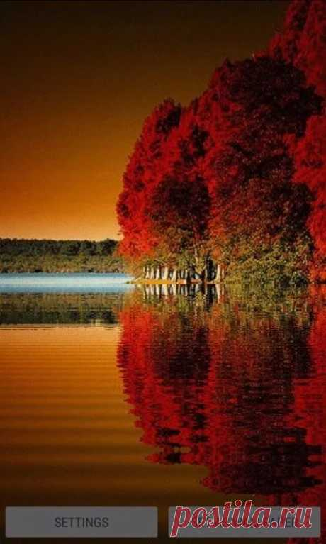 Red Tree Lake LWP for Android - APK Download в Яндекс.Коллекциях