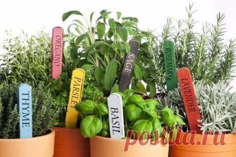 Комнатные растения | Экологическое землетворчество Пряные растения можно выращивать дома.