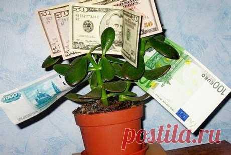 Я всегда закрываю унитаз и беру деньги левой рукой: народные приметы - всё к деньгам, 16 раз проверено | Ver-A | Яндекс Дзен