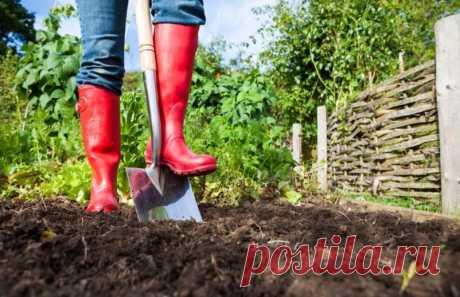 Почему стоит отказаться от глубокой перекопки почвы в огороде: Как правильно перекапывать землю на грядках: