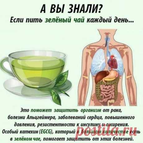 Зелёный чай настоящая панацея от многих болячек!