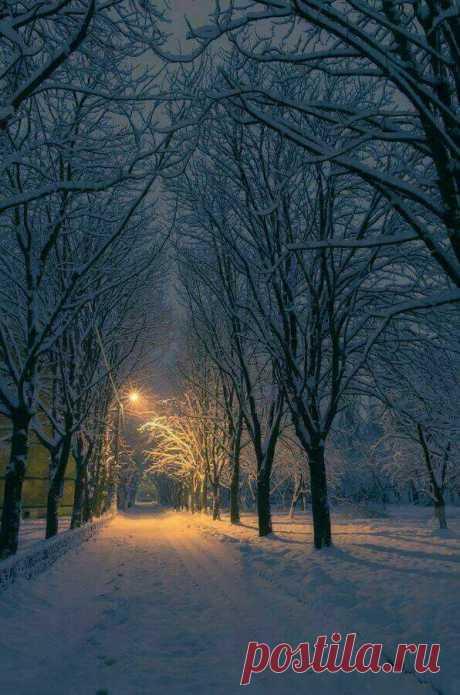 El diciembre