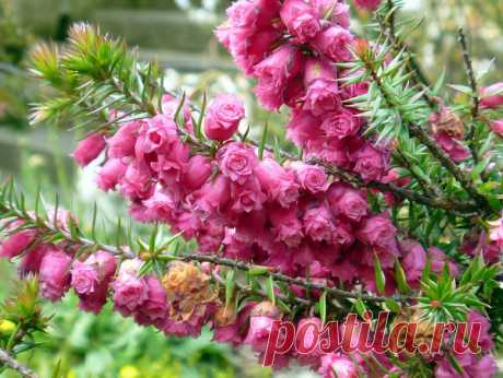 Красивые низкорослые кусты для вашего сада | САД | Яндекс Дзен