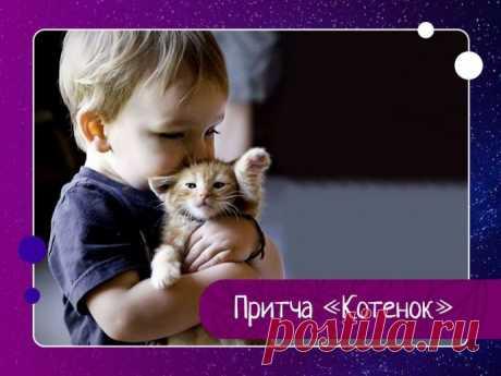 Продавец одного небольшого магазинчика прикрепил у входа объявление «Продаются котята». Эта надпись привлекла внимание детишек, и через считанные минуты в магазин вошел мальчик. Поприветствовав продавца, он робко спросил о цене котят.