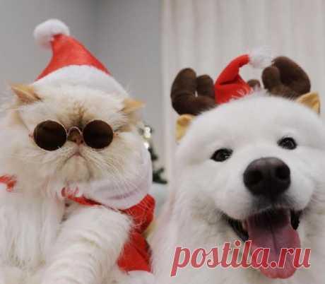Сердитый кот и счастливый пес: милые фото неразлучной парочки покорили сеть