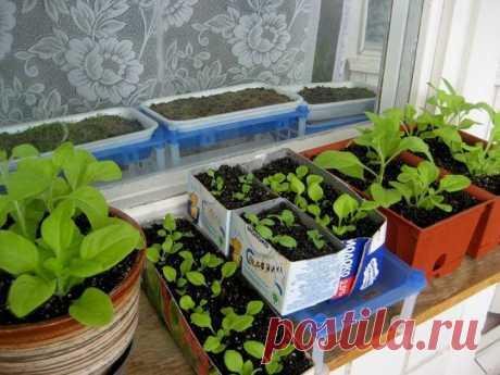 (+1) тема - О рассаде: Когда сеять овощи | ОГОРОД БЕЗ ХЛОПОТ