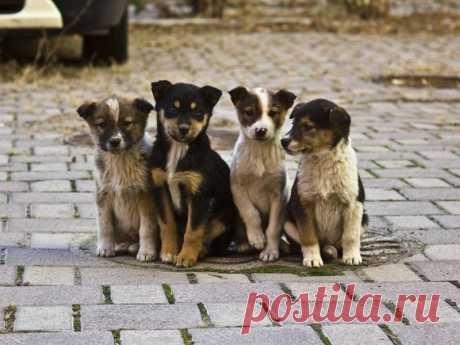 В России хотят ограничить разведение собак и кошек | nashi-pitomcy.ru