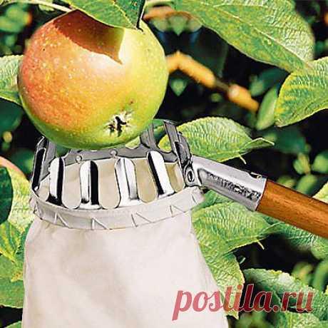 Плодосборник для яблок - 399 руб