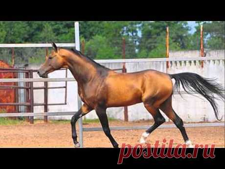 ▶ Красота и грация лошадей - YouTube