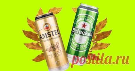 5 лучших марок баночного пива по версии Роскачества Пей пиво пенное под ритмы современные.