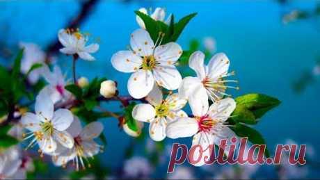 Morning Relaxing Music - Piano Music, Positive Music, Study Music (Madison)