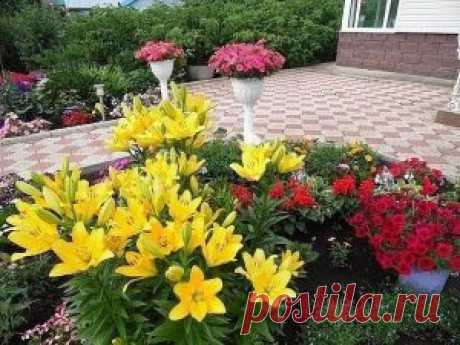 With such podkormka your flowers will grow by leaps and bounds | the Female blog