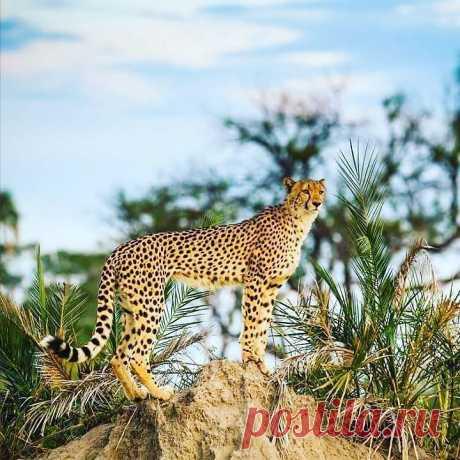 ¡#Cheetah!\u000d\u000a\u000d\u000a\u000d\u000ahttps:\/\/vk.com\/najibalghaeth\u000d\u000ahttps:\/\/ok.ru\/najibalghaeth
