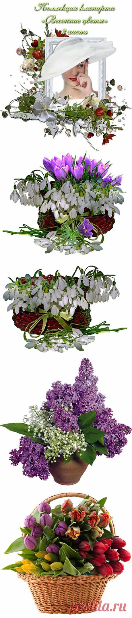 Коллекция клипарта «Весенние цветы» — 2 часть.