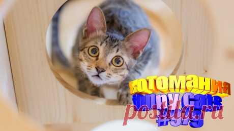 Любите смотреть смешные видео про кошек? Тогда мы уверены, Вам понравится наше видео 😍. Также на котомании Вас ждут: видео кот,видео кота,видео коте,видео котов,видео кошек,видео кошка,видео кошки,видео о котах, видео о кошках, видео смешные кошка, для котов, котов, кошка смешная, приколы котами, приколы про животных до слез, про кошек смешное, про кошку смешное видео, смешно кошки, смешной кот, смешные котики