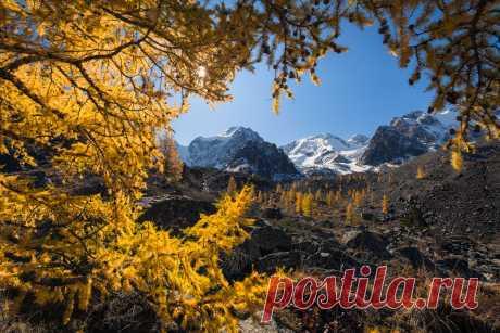 Шавлинские лиственницы. Фотограф Дин Зарго