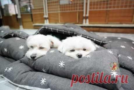 Корейский детский сад для щенков устраивает им тихий час, и это просто умилительно