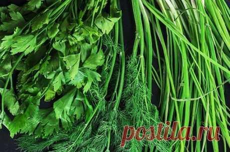 Снадобья согорода. Какие болезни лечат зелёные овощи? Зелёный лук, укроп, петрушка годятся не только для салата. Грядка с зеленью способна заменить целую аптечку.