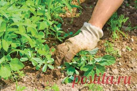 Сорняки подскажут, насколько участок пригоден для овощей С тем, что участок перед закладкой сада надо проверить на пригодность, знакомы почти все. Но почему-то многие считают, что овощи растут везде. Это не совсем так. Определить на все 100%, что ваш участок годен для овощных посадок, сможет только серьезный лабораторный анализ...
