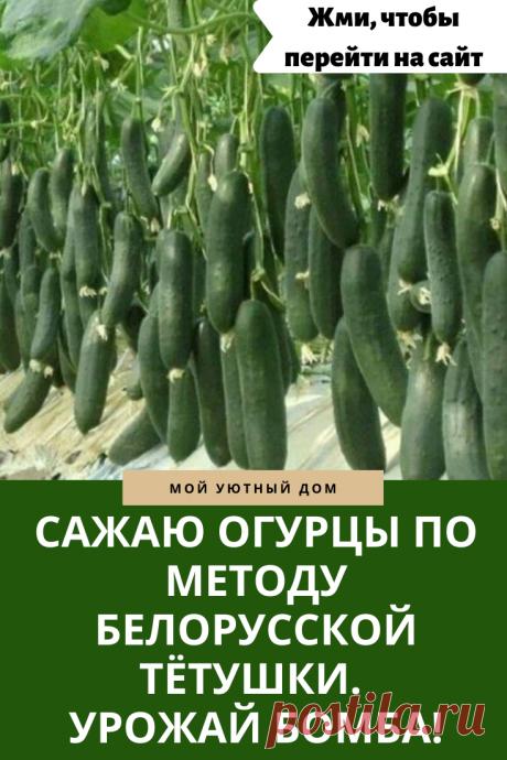 Метод посадки огурцов для получения огромного урожая