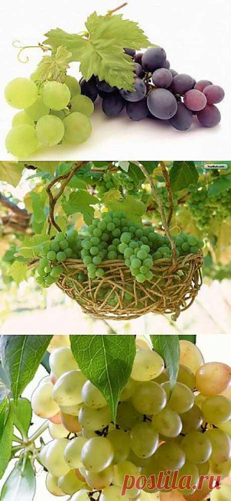 Полезные свойства винограда | Девичник
