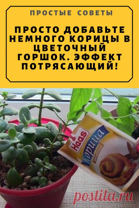 Просто добавьте немного корицы в цветочный горшок. Эффект потрясающий! — Простые советы