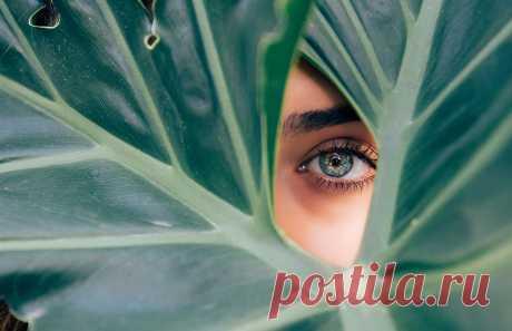 11 продуктов для улучшения зрения :: Здоровье :: РБК Стиль