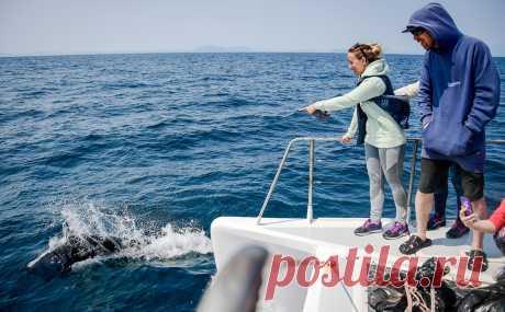 Правительство запретило экспорт морских свиней, дельфинов и китов. На ближайшие полгода продажа в зарубежные страны российских китов, дельфинов и морских свиней запрещается.