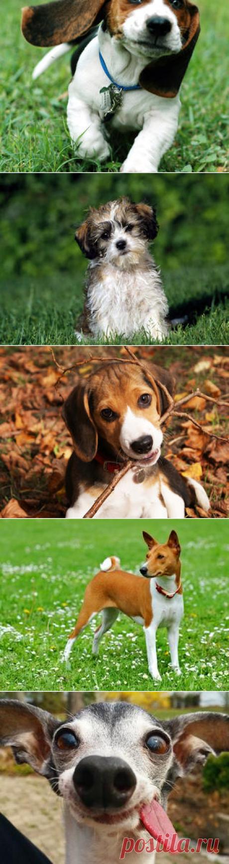 Смотреть изображения собак | Зооляндия