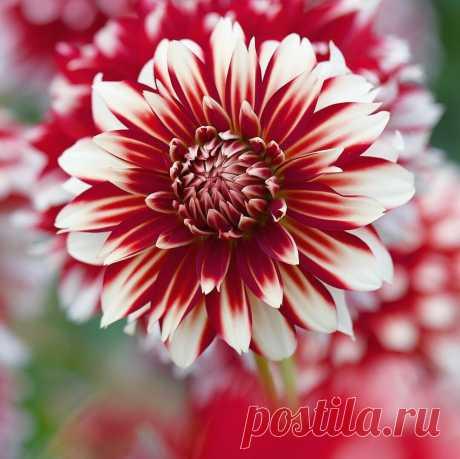 «🌺 Цветы 🌺 »в Яндекс.Коллекциях