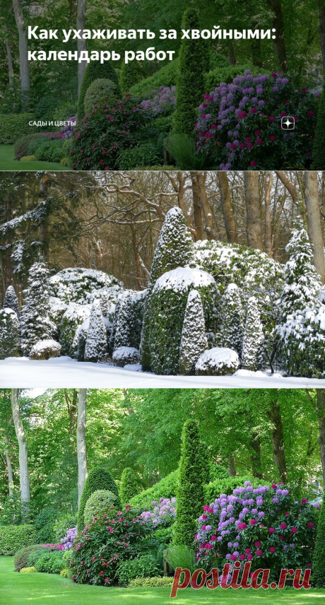 Как ухаживать за хвойными: календарь работ | Сады и цветы | Яндекс Дзен