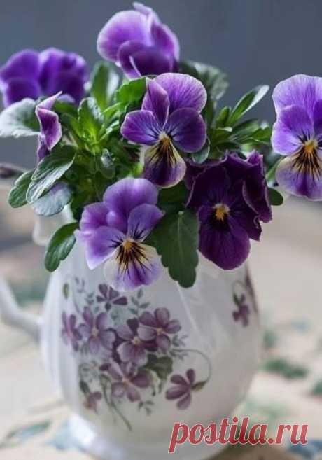 """#Романтика_Реальный_Мир #романтика #природа #красота Лесные фиалки... """"Многие на острове, включая меня, верили, что эти цветы обладают таинственной силой, могут исцелять раны души и тела, примирять поссорившихся друзей и даже приносить счастье...""""  Сара Джио"""